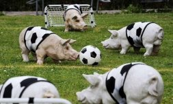 Animals playing sports Image