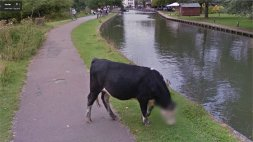 Animals caught on street view Image