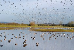 Wild Winter Weekend at Slimbridge Image