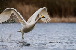 Slimbridge closes to all visitors until further notice Image