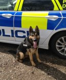 Appeal to businesses to help train police dogs Image