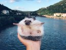 The life of an extraordinary hedgehog Image