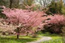 Breathtaking blossom on show at Batsford Image