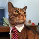 Cats in business attire Image