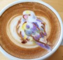 There is a bird in my coffee Image
