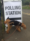 Dogs at polling stations Image