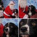 Funny pictures with Santa Image