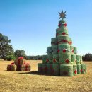 Twenty creative Christmas trees Image