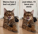 Cats laughing at dad jokes Image