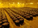 Cannabis grow discovered at Gloucestershire industrial estate Image