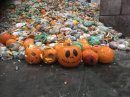 Severn Trent gears up for jump in pumpkin power this Halloween Image