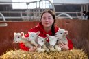 One-in-million quintuplet lambs born at Hartpury Image