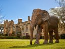 Elephant Family to have extended stay at Sudeley Image
