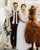 Animals at weddings Image