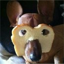 Dogs and cats in toast! Image
