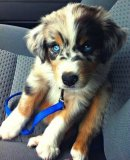 Cute cross breeds Image